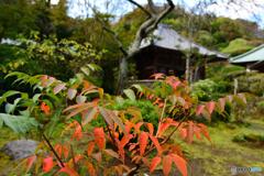 鎌倉 海蔵寺1