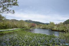箱根湿性花園2