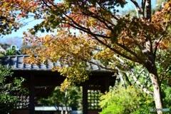鎌倉 海蔵寺2