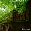 水路閣の赤レンガに映える緑の椛4