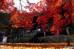 大國寺の本堂と椛