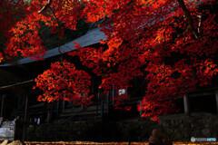 大國寺の本堂と椛2