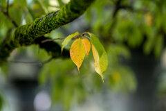秋のおとづれ