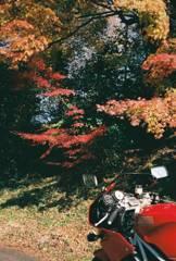 ある秋の散歩