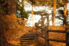 秋のなごり