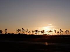 朝の防潮林