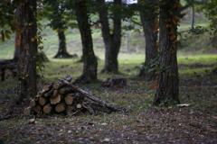 木こりたちの休息