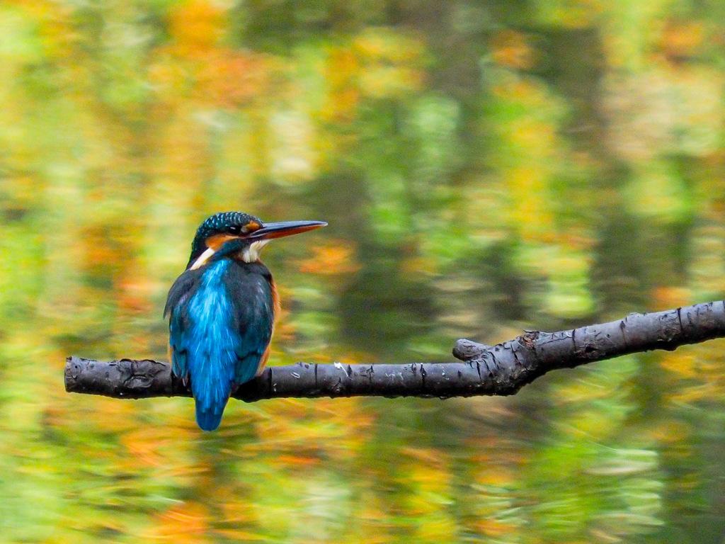 秋色に浮かぶ青