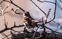 bird‐watching 3