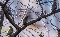 bird‐watching 4