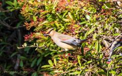 bird‐watching 2