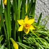 My-Home Flower 2