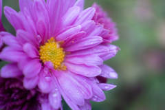 淡い紫の知らないお花