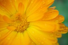 黄色の知らないお花