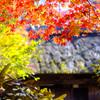 峠茶屋の紅葉
