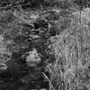 梅咲く小渓流
