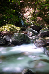 薄緑の流れ