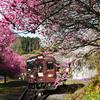 花見列車は行く