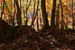 森の中の彩り