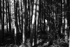 竹林の木漏れ日