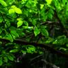 透き通る緑