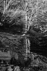 冬の渓/水溜り