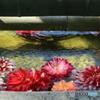 水の中の花2