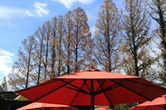 赤い傘と青空と木