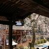 寺からの桜