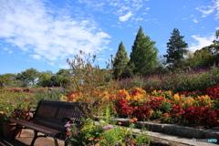 秋の花と空