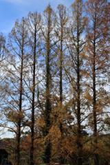 枝の隙間から秋空