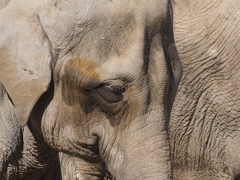 上野動物園の象