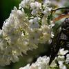 花のドリル