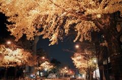 真夜中、日本大通り