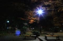 真夜中、横浜公園の日本庭園