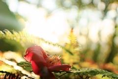 Dust flower