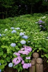 紫陽花で雨宿り