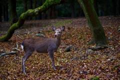 Deer in a deep forest