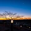 -6℃ 合歓の裸木とともに日の出を待つ