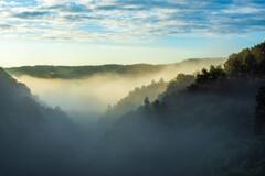 霧の中の存在感