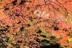 スパンコール紅葉