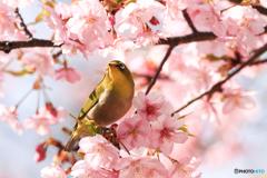 春 待ちどおし♪