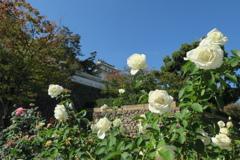 福山城と秋薔薇