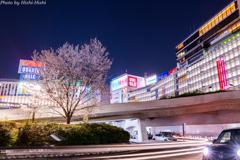 さりげない日常 ~ Sakura-Night