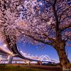 桜の季節が待てなくて...