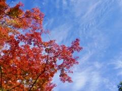 兼六園 紅葉と青空