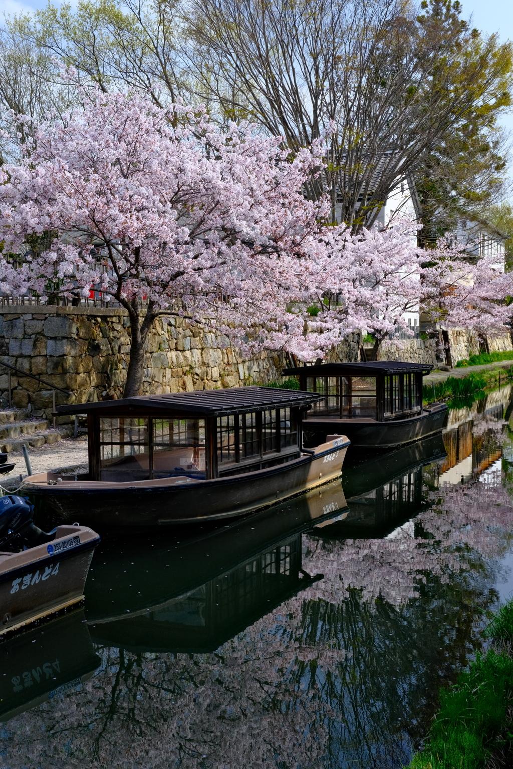 八幡堀めぐり 春