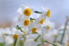 春の陽射しの中