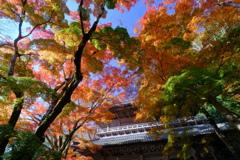錦秋の永源寺