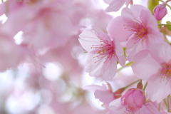 やすらぎの春色